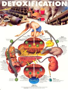Check this really cool graphic of Detoxification!
