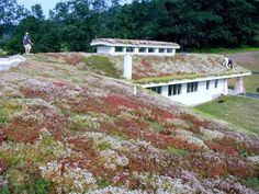 Managing Non-point source pollution using bioretention, green roof, and infiltration for Pennsylvania. Small Space Gardening, Garden Spaces, Surface Drainage, Green Roof System, Magical Room, Roofing Options, Residential Roofing, Living Roofs, Sky Garden