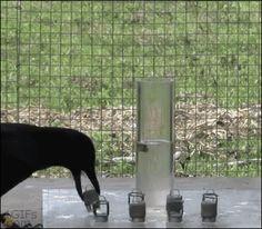 Un des animaux les plus intelligents, publiée le 1 Avril 2014