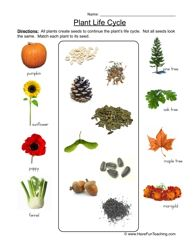 Seeds Plants Worksheet Fill In The Blanks Venotha