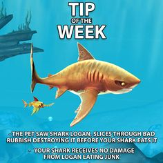 We have garbage as much as the next shark, thanks to the Saw Shark however we don't need to worry about it! This little guy will tear through any he sees!