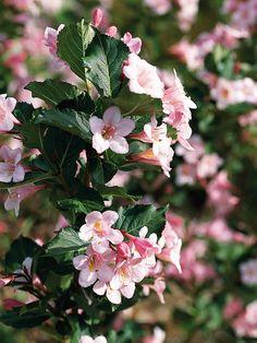 farbenfrohe büsche zauberhafte Blüten