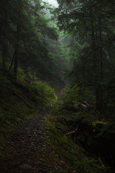 Запретный лес — громадный лес на территории Хогвартс. Назван из-за того, что ученикам запрещено заходить туда без сопровождения. В лесу обитают волшебные существа, многие из них весьма опасны. Лес является домом для стада кентавров и для колонии акромантул, в нём водятся единороги и фестралы, на деревьях живут лукотрусы и феи. На краю Леса, за деревьями, находится открытая полянка. В хорошую погоду она залита солнечным светом. На опушке проводятся уроки по Уходу за магическими существами.