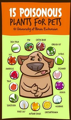 Items Can Be Toxic to Pets - Veterinary Medicine at Illinois Poisonous Plants for Pets quot; A good list to keep handy if you have pets! Poisonous Plants for Pets quot; A good list to keep handy if you have pets! Illinois, Dog Health Tips, Pet Health, Health Care, Dog Information, Info Dog, Poisonous Plants, Pomsky, Pomeranian