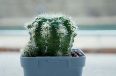 Cactus Photo   Botanical Wall Décor Fine Art Photo by Camerallure, $25.00