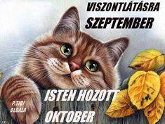 2017. szetember,Szeptember vége van ma, Október jön,őszi napéjegyenlőség ma van,Ma van az őszi napéjegyenlőség,,Ősz,Ősz,Hideg van, esik az eső!,2014.09.01,Szeptember megérkezett,szeptember van, - kicsoda57 Blogja - vörösiszap,Kolontár,Devecser,2011.01 ... Cats, Blog, Animals, Gatos, Animales, Kitty Cats, Animaux, Blogging, Cat