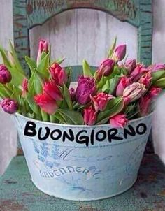 Buongiorno Good Morning Greetings, Good Morning Good Night, Good Morning Quotes, Italian Greetings, Christmas Pictures, Videos Funny, Decir No, Plants, Mourning Quotes