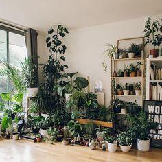 #TBT to one of our favourite plant family portraits - - - #Haarkon #HaarkonHouse #plantgang #houseplants #plantportrait #plant #plants #monstera #houseplantsofinstagram #urbanjunglebloggers #botanical #botanicalpickmeup #indoorjungle #jungle #interior #indoorgarden #potplants #cacti #cactus #plantfamily #instaplant #plantsofinstagram #plantstagram #botanicalgardens #botanicalstyling