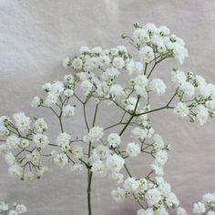 "New Love Baby's Breath Flower– 10 bunches for $119.99, 20 bunches for $199.99. Average of 6-9 stems per bunch. Average stem length of 20"" to 31.5"". Available year round."