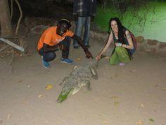 Tiempo libre y diversión durante el programa de voluntariado de Gambia #cocodrilo