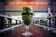 brewdog love hops and live the dream - Google Search