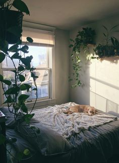 Great use of indoor plants to add to the cozy effect - Cozy Places, Cozy Interior Design Concepts and Decor Ideas Room Design Bedroom, Room Ideas Bedroom, Home Bedroom, Bedroom Decor, Bedroom Inspo, Bedrooms, Cute Room Decor, Minimalist Room, Pretty Room