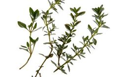 Meninices: Chá de Tomilho para a tosse e vias respiratórias