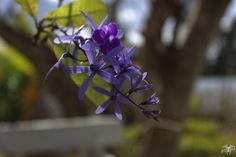 IMG_1077_DxO | Flickr: partage de photos!
