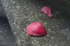 petali di rosa sul bordo by Clay Bass on 500px