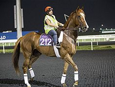 Little Mike and Dullahan have emerged from their initial races in Dubai in good order, and trainer Dale Romans plans to send them for workouts March 24 prior to their starts on the $27 million Dubai World Cup (UAE-I) program at Meydan six days later.