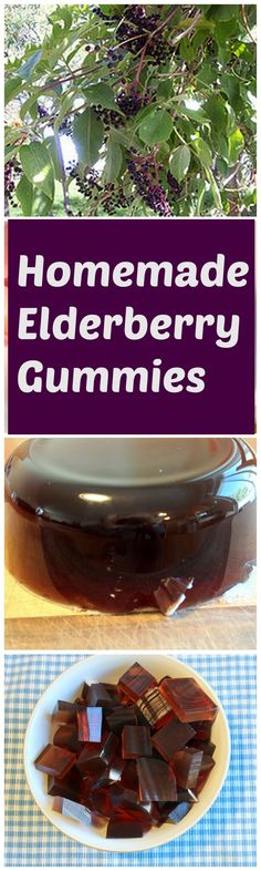 Recipe for homemade elderberry gummies. Elderberry is traditionally used to boost the immune system, this mom says her kids have never gotten sick while they were taking it!  Individual servings makes it easy to remember.