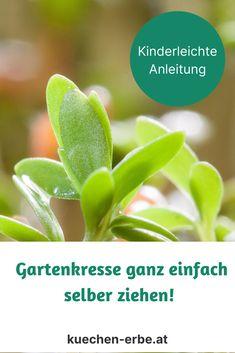 Trau dich! So ziehst du Gartenkresse ganz einfach selbst! (Macht auch Kindern großen Spass). Und bloß keine Ausreden! Alles was du brauchst ist eine helle Fensterbank! Auf geht's! Plants, Blog, Harvest, Simple, Flora, Blogging, Plant, Planting