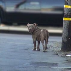 A heartwarming pitbull rescue:   Click here to watch this video: http://www.wimp.com/pitbullrescued/
