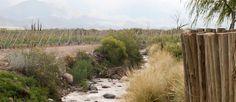 Bodega #Gimenez #Riili (Valle de #Uco, #Mendoza)