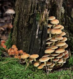 Mushroom Art, Mushroom Fungi, Autumn Day, Winter, Fauna, Dark Souls, Autumn Inspiration, Natural Wonders, Mother Nature