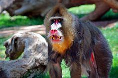 50 dos animais exóticos mais bonitos da Terra 24