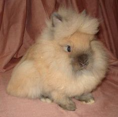 Image result for blingee rabbit images
