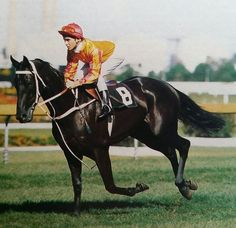 Kingston Town was an outstanding Australian bred Thoroughbred racehorse who won a record three Cox Plates and 11 other Group One races in a career spanning from 1979 to 1982. Born: August 31, 1976 Died: March 22, 1991 Record 41: 30-5-2