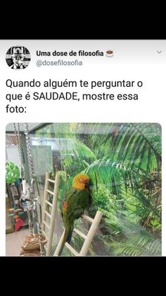 Ahhhh que fofo mas triste Bts Memes, Dankest Memes, Funny Memes, Animals And Pets, Cute Animals, Funny Animals, Little Memes, Moral, Truth Of Life