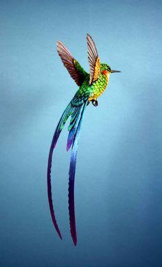 Bizarre, vous avez dit bizarre.What a beautiful hummingbird!