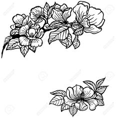 33740552-Twig-of-magnolia-flowers-and-leaves-Vintage-drawing--Stock-Vector.jpg (JPEG Image, 1300 × 1300 pixels) - Scaled (49%)
