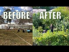 Lawn to FOOD FOREST In 5 Years, Natural Farming Permaculture Gardening - YouTube
