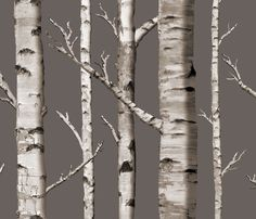 Birch Grove in Cashmere fabric by sparrowsong on Spoonflower - custom fabric - Possible wallpaper for one feaure wall