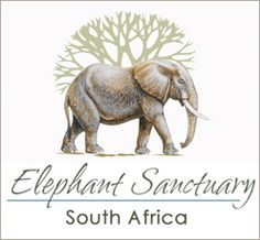 Elephant Sanctuary, Hartbeespoortdam, Plettenberg Bay, South Africa