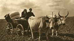 Images from Romanian village patriarchal former - Ox Cart (Dobrogea) Romania People, Old Photography, Medieval, Drawings, Pictures, Vintage Portrait, Cultural Diversity, Rock Formations, Arya