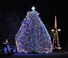 Manteo's Christmas tree - beautiful!