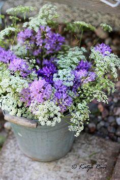 White & Violet Flowers