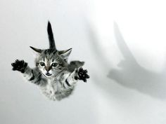 flying kitty!