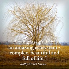 Quote from sustainable farmer/grower/herbalist Kathy Krezek Larson, whrontier Natural Products Co-op. She founded Frontier's prairie reserve which is now named after her.