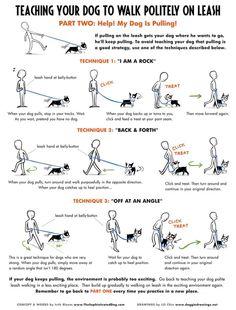 Teaching your dog to walk politely on leash.
