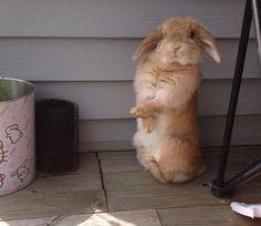 coelhos mais fofos (22)