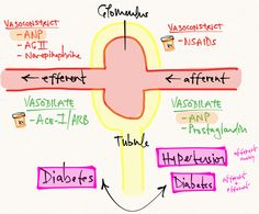 Afferent vs. Efferent Arterioles