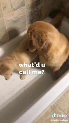 Cute Baby Dogs, Cute Funny Dogs, Cute Dogs And Puppies, Cute Funny Animals, Doggies, Cute Animal Photos, Cute Animal Videos, Funny Animal Pictures, Chien Golden Retriever