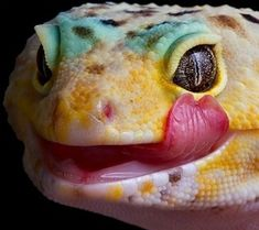 This is a leopard gecko. In addition to it's charming smile, it is special because of its moveable eyelids, and also its ability to detach its tail when attacked and regenerate it later!