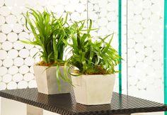 Reciclar e Decorar: PAP vasos com folhagens