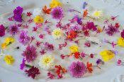 Shop Edible Flowers - Flower Micro Premium Flowers Mix™