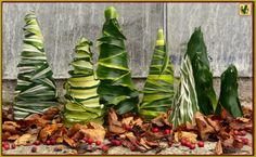 Kerst 2016,..Piepschuim punten van 10, 20 en 25 cm bepalkt met Dracaena blad van Green Jewel, White Stripe, Lemon Lime, Dorado, Malaika en Green-White