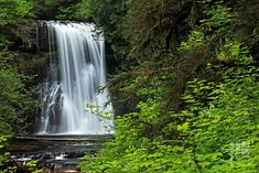 photo of water falls and trees #Upper #North #photo water falls #Images #Creek #River Silver  State State  Park #Trail #Ten #Loop #Nature #Wilderness #Photography #Oregon #Sublimity #Foliage #Leaves #Trees #Forest #waterfall #stream #water tropical Rainforest #tree #scenics beauty In Nature #landscape #outdoors #freshness #falling green Color #5K #wallpaper #hdwallpaper #desktop