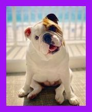 The Us Biggest Canine Welfare Charity Discover French And