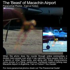 "The 'Beast' of Macachin Airport.  ""When it (the photo) did the rounds, many claims were made stating that the creature had been seen about the airport and nearby neighbourhoods. It was also thought that it was carnivorous though I can find no real reason why this is stated."" Read more here: http://www.theparanormalguide.com/blog/the-beast-of-macachin-airport"